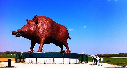 World's Largest Boar